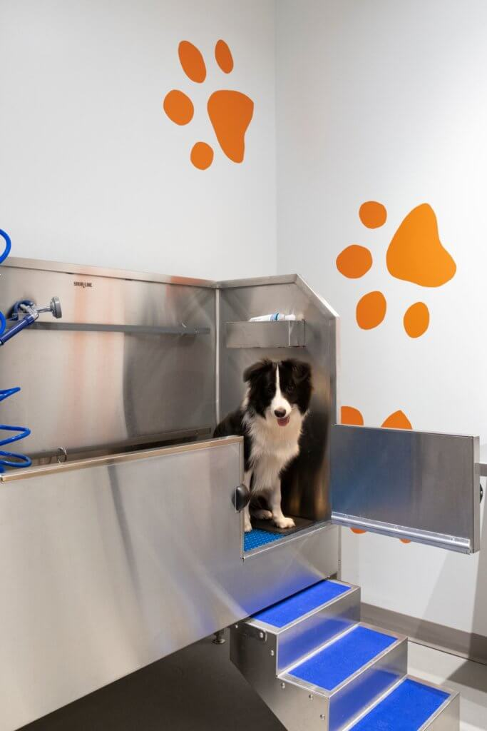 Pet Friendly, Dog Washing Station, J Malden Center, Rental, Malden MA, Dog, Cat, Pawprints, Luxury Rental, Pleasant Street